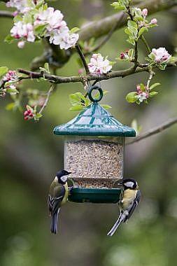 Linnusöögid ja söögimajad