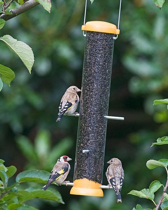 söögimaja_bird-lovers_ohakaseemnetele