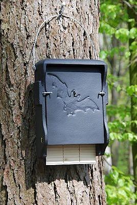 nahkhiirte pesakastid