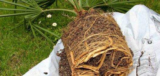kaktuste istutus_2012_093