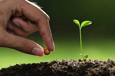 taimede kasvatamine_02