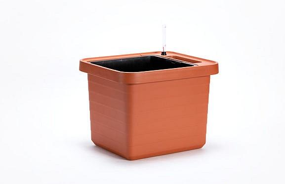 Kasvatuse konteiner Berberis_04