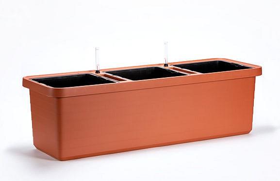 Kasvatuse konteiner Berberis_026